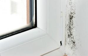 problem wentylacji w mieszkaniu, pleśń w mieszkaniu