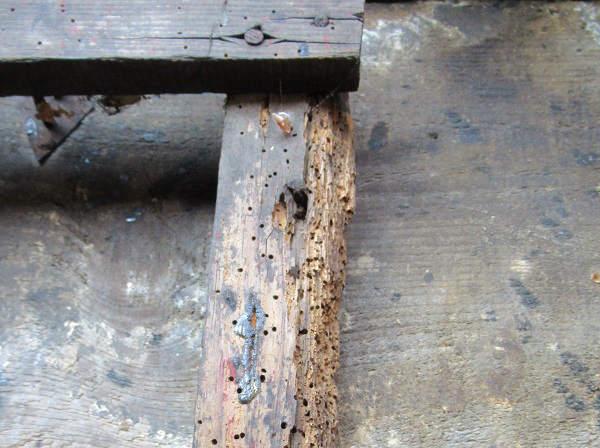 jak sprawdzic stan techniczny mieszkania insekty poznan