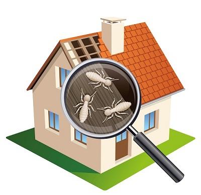insekty mieszkanie dom - robaki w mieszkaniu