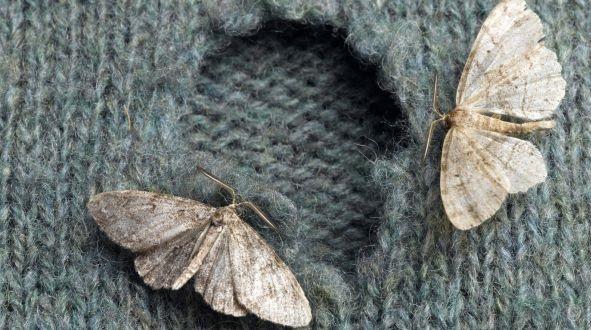 robaki w mieszkaniu skrzydla ubrania